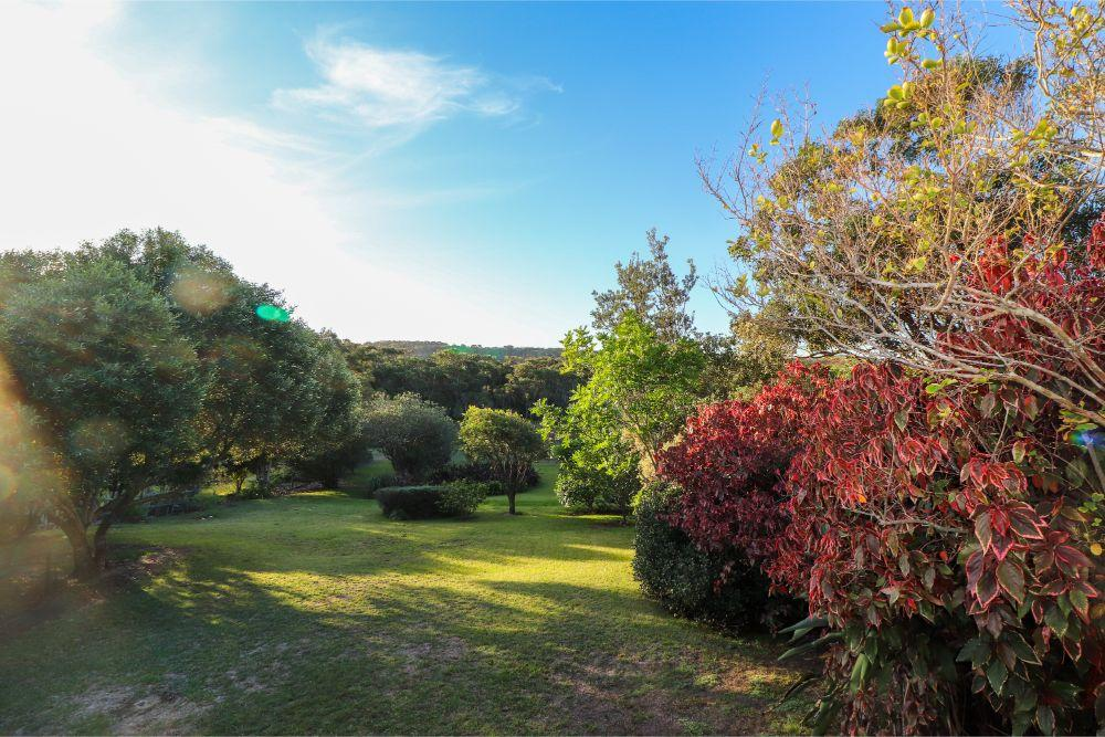 catho-cottage-catherine-hill-bay-yard